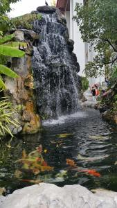 The man made waterfall and koi pond is delightful